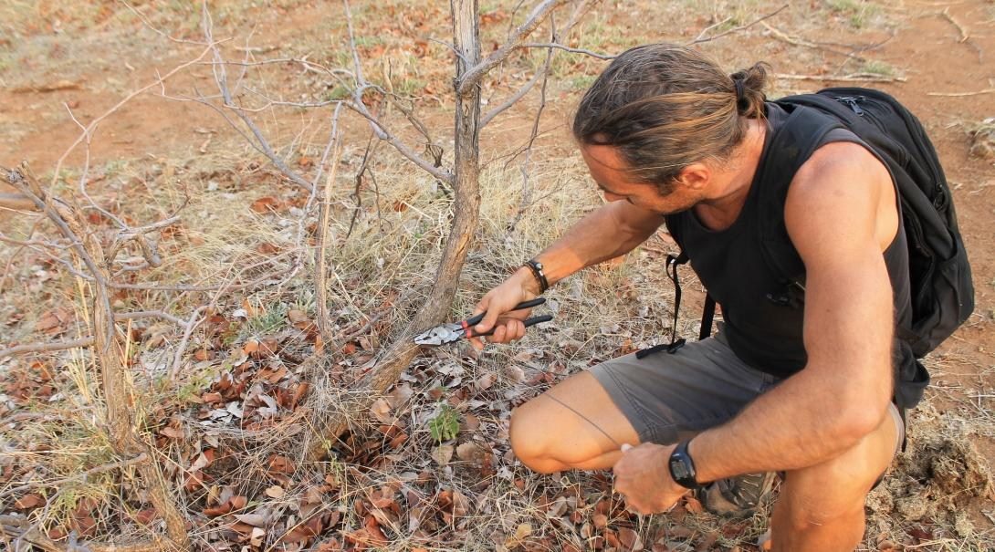 A Conservation volunteer removes a poaching snare while volunteering abroad in 2019